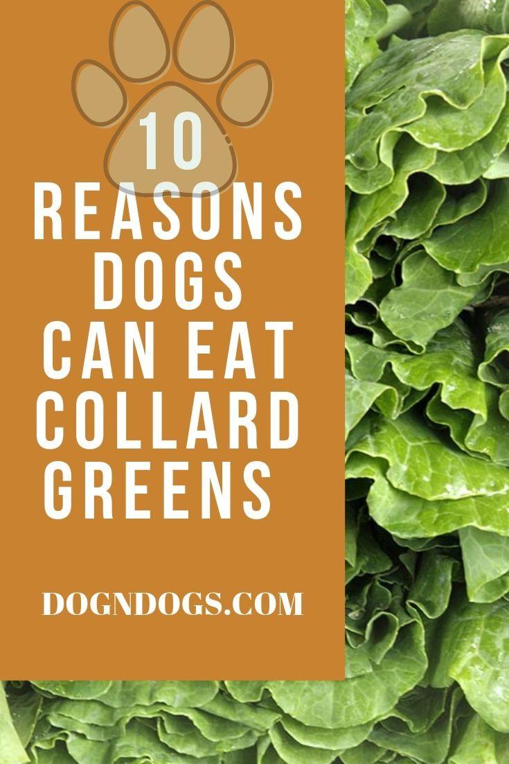 10 Reasons Dogs Eat Collard Gre - courteousman | ello