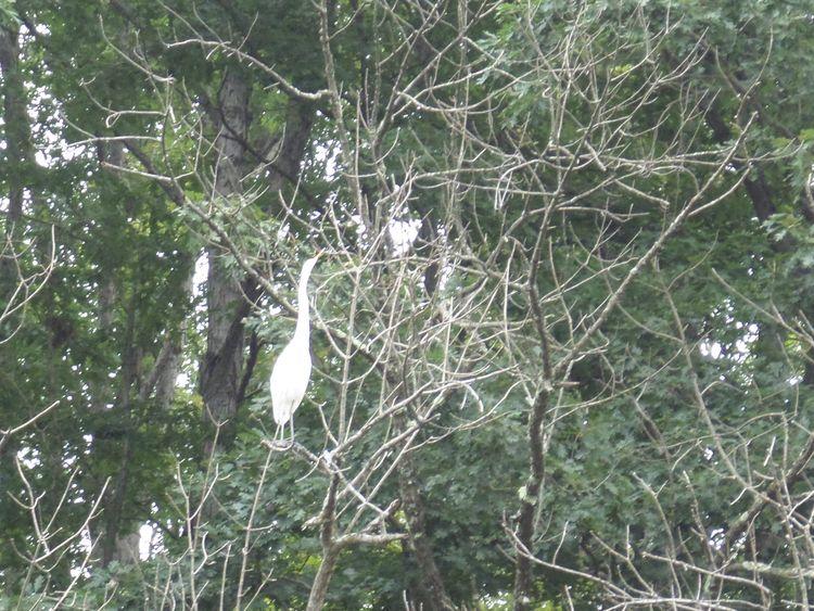 West Virginia Cranes - i_phish | ello