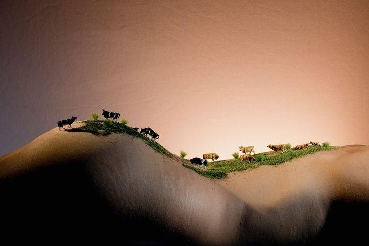 Vaches collines - bodyscapes | ello