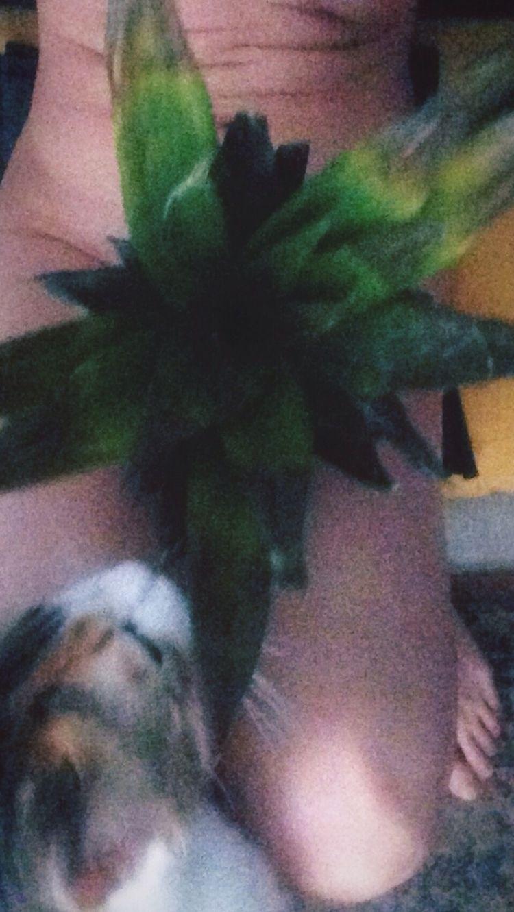 Meow pics - kohananeptune | ello