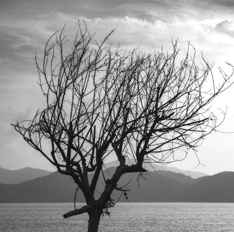 black white tree hongkong - jonathan_tsc | ello