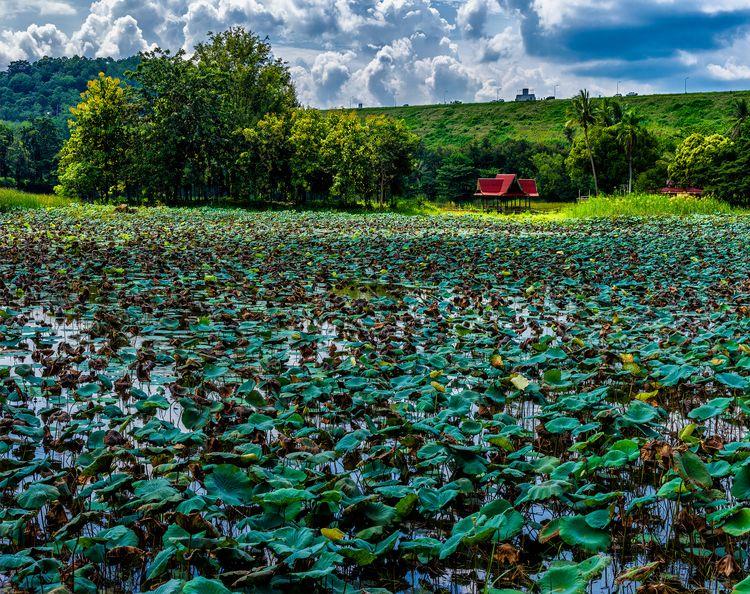 refuge peace dam Krachan - landscape - christofkessemeier | ello