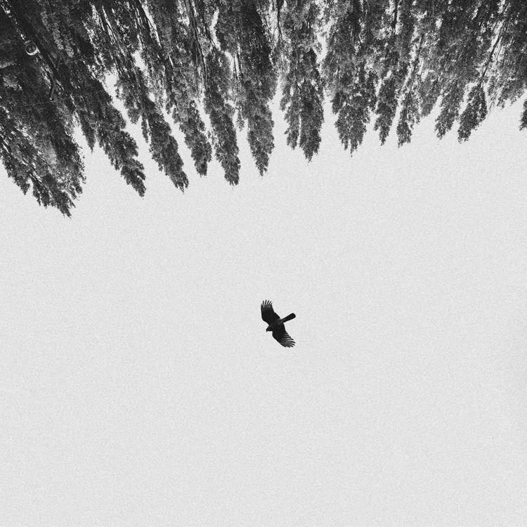 Lying Oak - 01, photography, fineart - debigraphy | ello