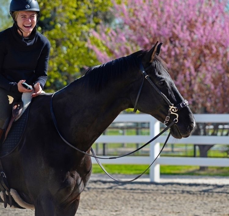 horses happiness - elloequestrian | ello