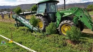 Hemp Seeds Harvest Handler Prot - elizaballot   ello