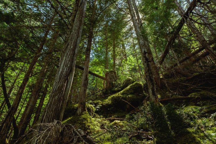 Backcountry hike BC - mainapertolas | ello