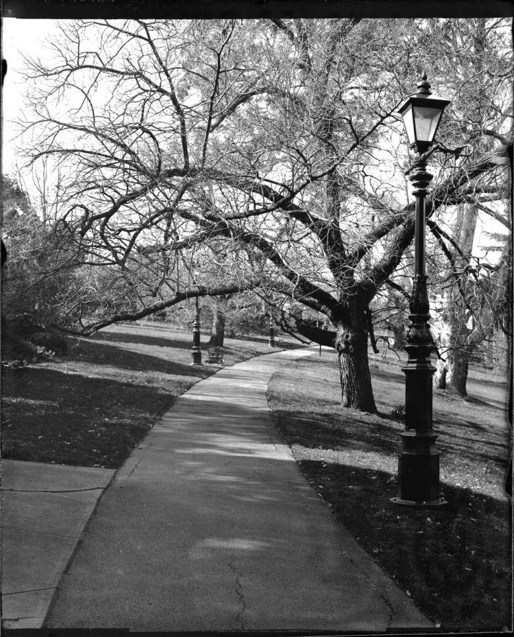 Canterbury Gardens, Melbourne.  - leelira | ello