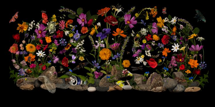 junk - vanitas, nature, flowers - bespokephoto   ello