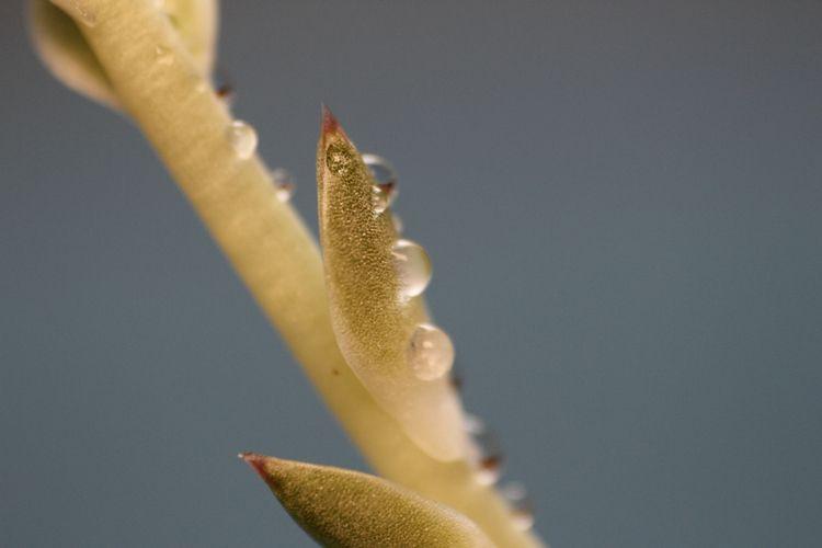 Distance Reality image - cactus, - tinacollins   ello