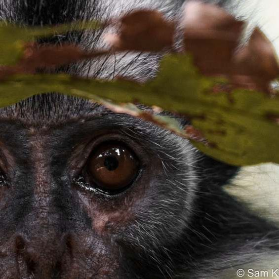 Funky Monkey - samkresslein   ello