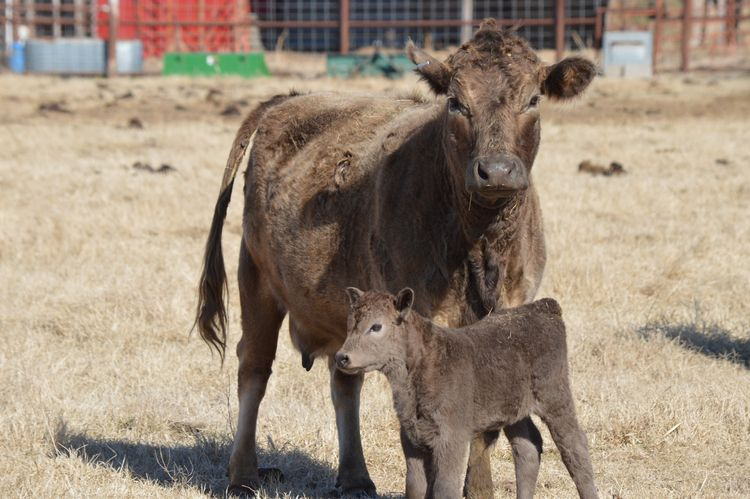 Mom son (Oklahoma, February 201 - bigcomposer   ello