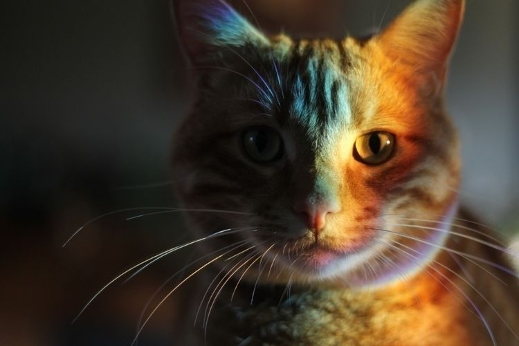 Unedited Animal Portrait - cat, pets - heated | ello