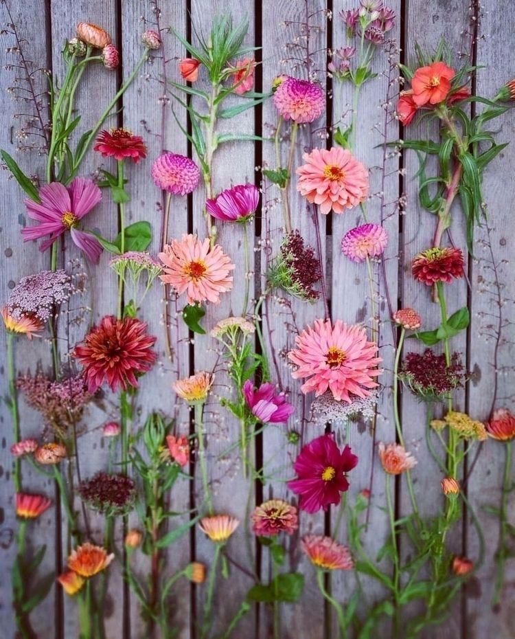 Flowers garden - silviadekker | ello