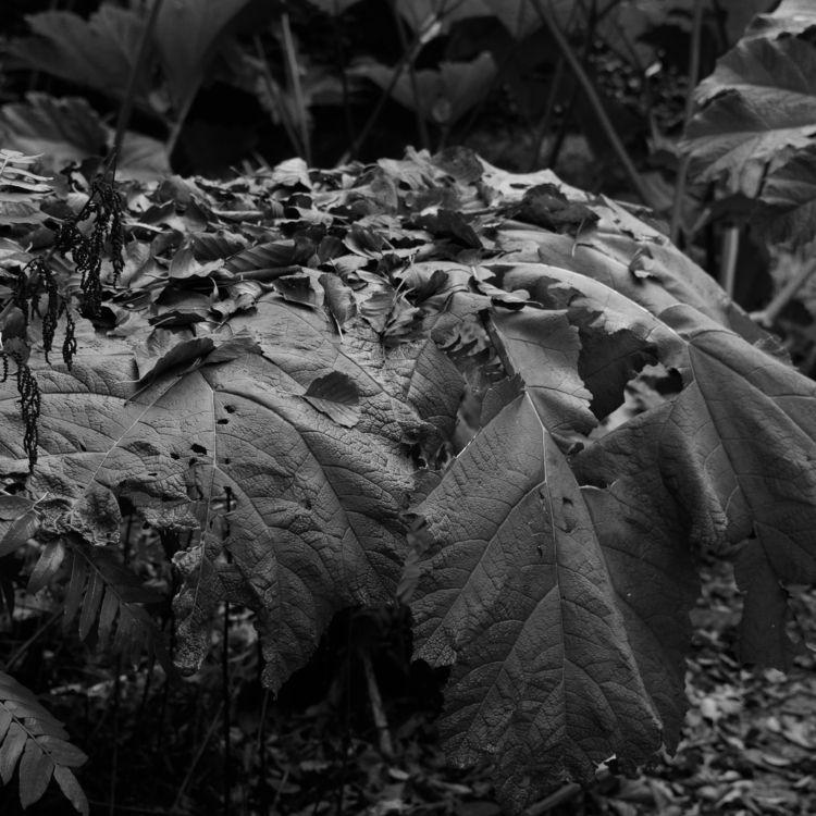 Elephant - photography, botanicalgarden - marcushammerschmitt | ello