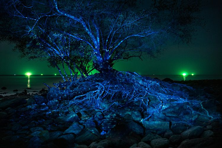 Video Projection-Mapping tree n - philipp_frank | ello