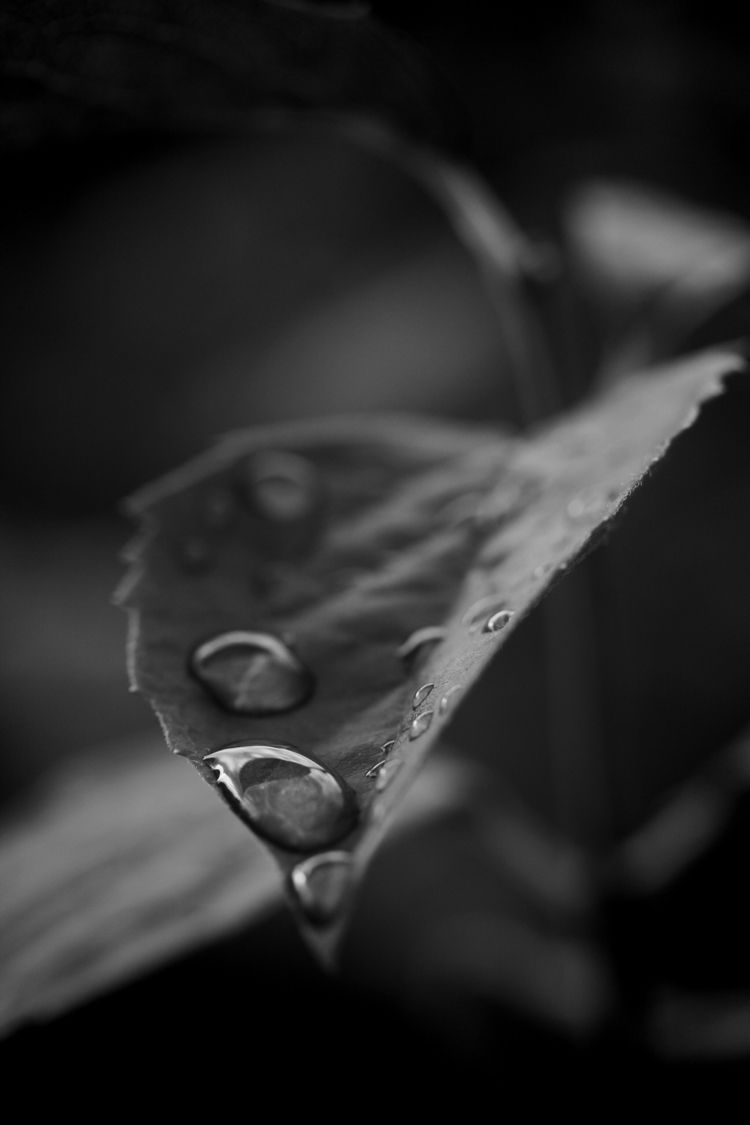 rain - waterdrops, bw - taari | ello