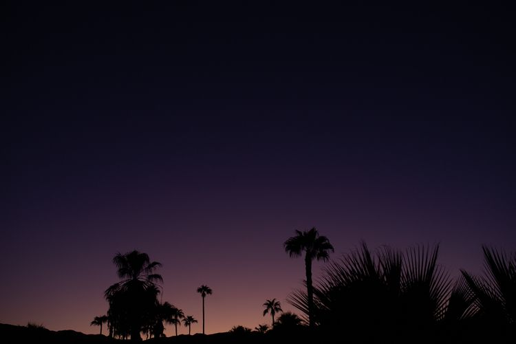 Purple haze//Palm Springs//2019 - damien_furey | ello