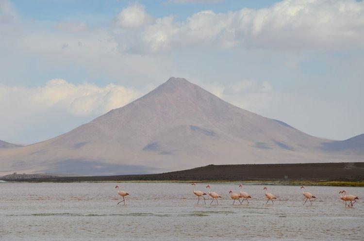 Wild Flamingos pastel-coloured  - fabiennegutjahr | ello