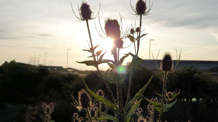 sunrise, england, kent, depthoffield - mattoutdoors | ello