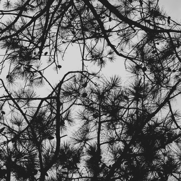 pine, blackandwhite - underflow | ello