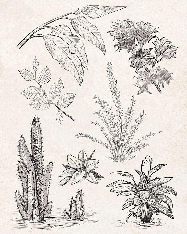 Sketches: Plants 1 - inktober, inktober2019 - manfredrohrer | ello