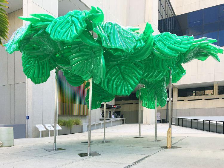 Philodendron Folly architectura - amlgmatd | ello