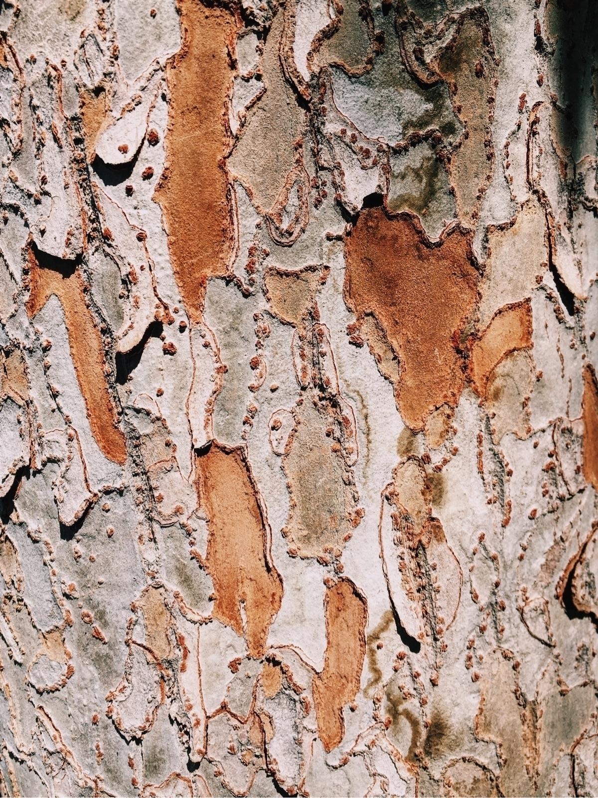 Grow tall - texture, nature - tangledtriangles | ello