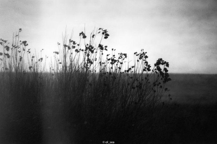 film, blackwhite, monochrome - ol_sea | ello