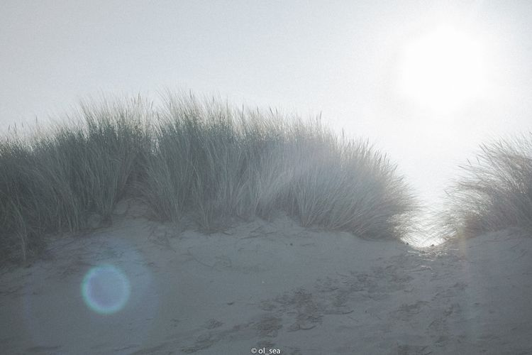 beach, dune, sunshine, nature - ol_sea | ello
