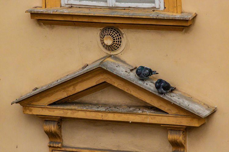 Precarious Perch Prague, Czech  - davidseibold | ello