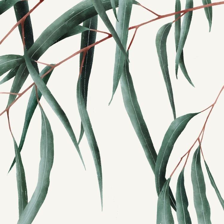 Eucalyptus <3 ig - kaluci   ello