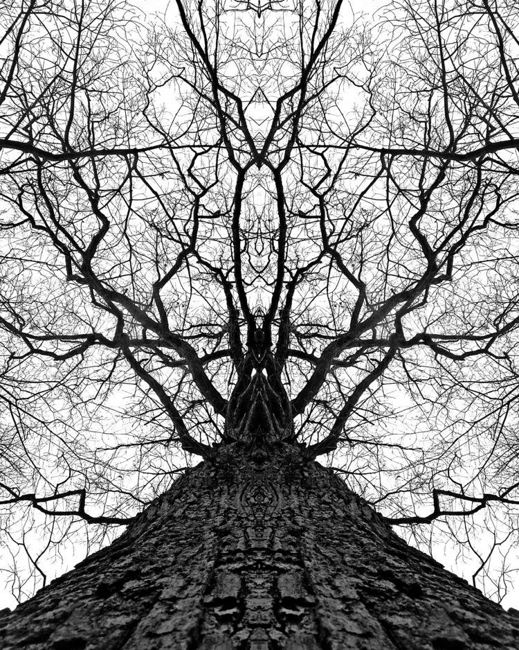 kingdom trees 2 - photography - kenlong | ello