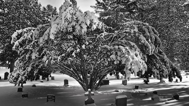 history? Cemetery - park, Tree, Snow - darkroomimaging | ello