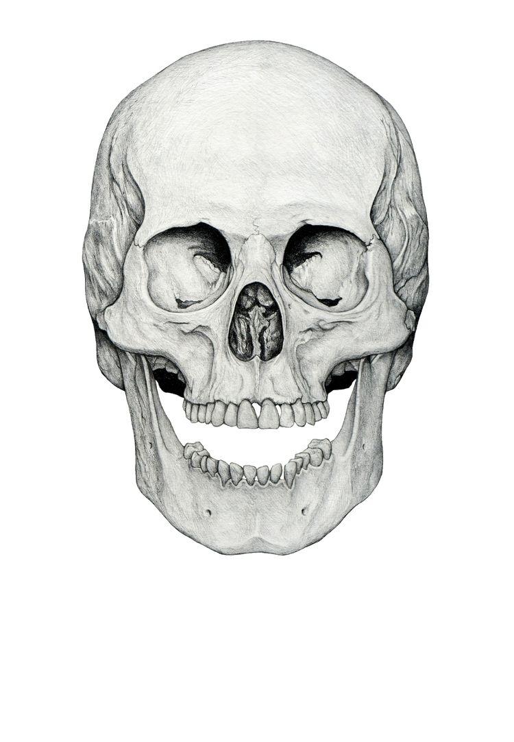 'Smiling Skull', graphite paper - peterandrew   ello