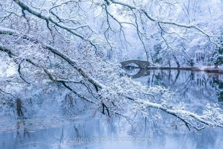 Snowy trees stone bridge pond C - theslouchingbeast | ello