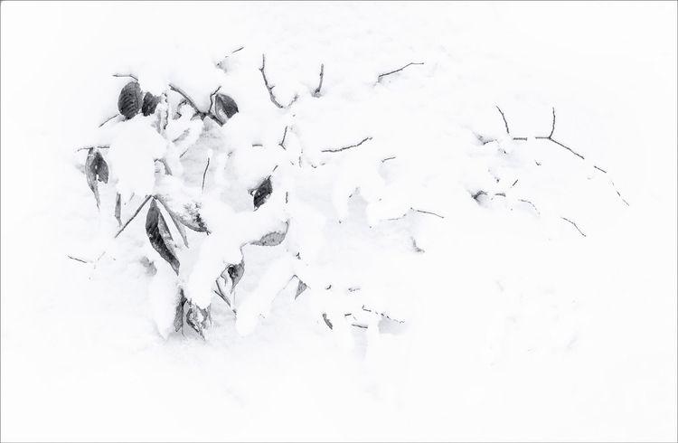 monochrome, blackandwhite - docdenny | ello