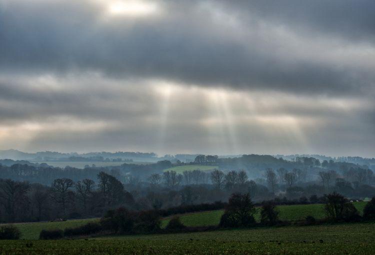 misty morning, morning Leckford - neilhoward | ello