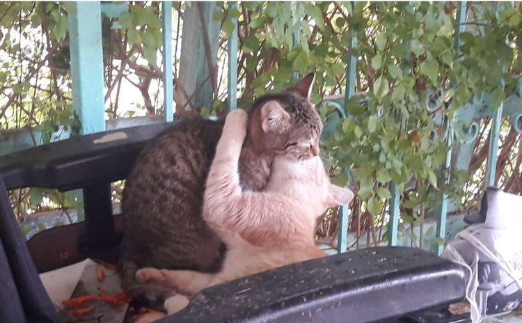 Cats Neot Hadasa  - davidnetzer   ello