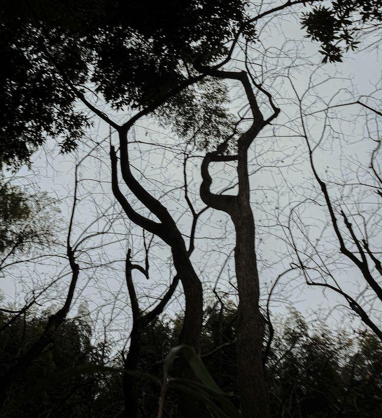 Tree Signs Japan color - japan, photography - brenthirak | ello