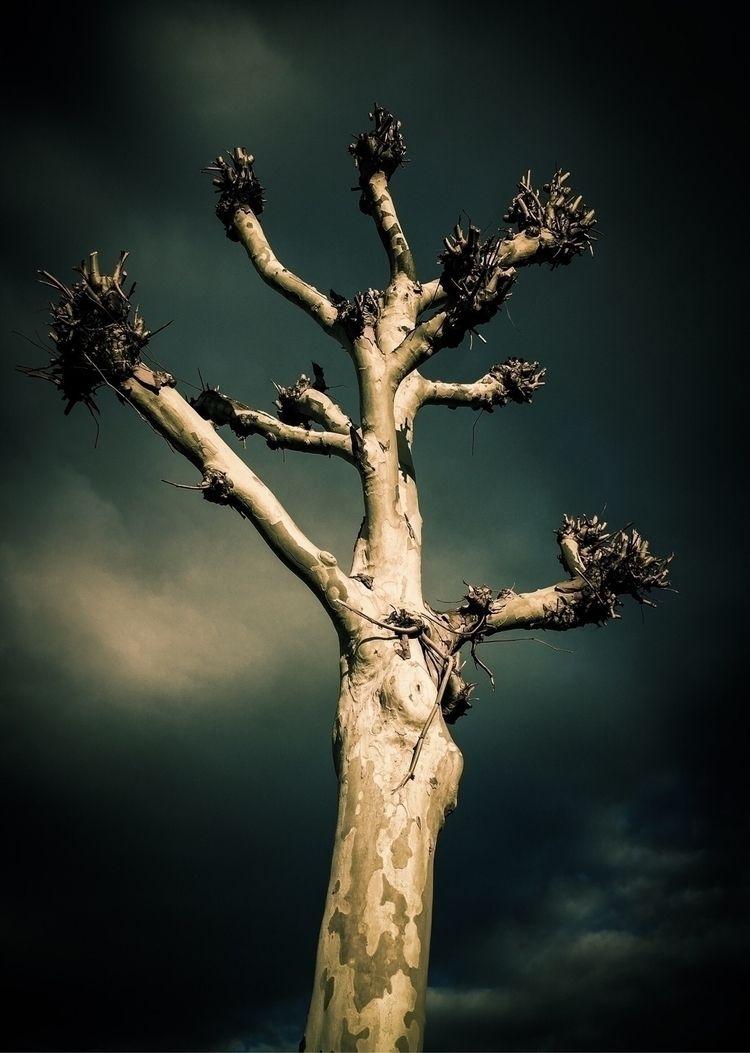 Rare African Malombo Tree Plane - ds-artwork | ello