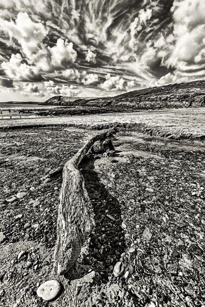 piece driftwood lies stream bed - stevepurnell | ello