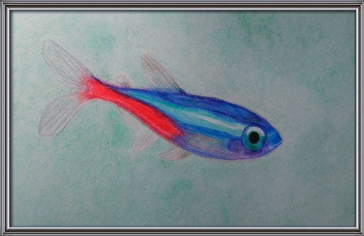 Neon Tetra - colored pencil stu - jester-loki   ello