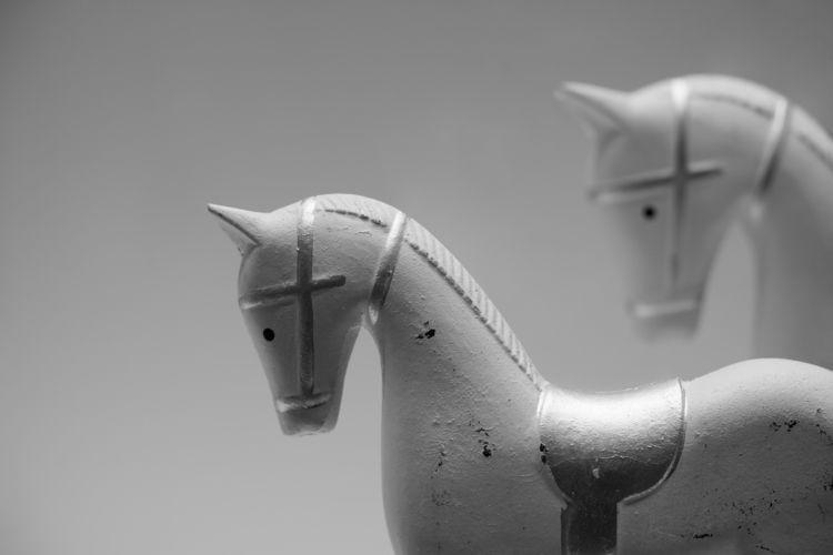 golden horses - photography, horse - marcushammerschmitt | ello