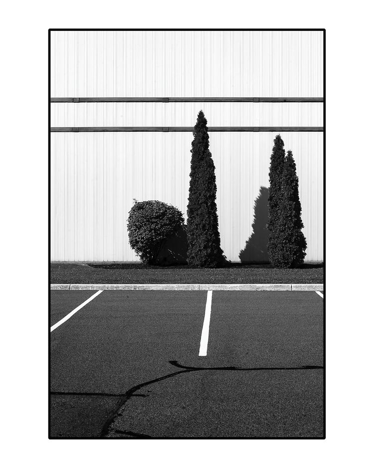 1: Parking Lot Trees, Crossing - patrickchuprina   ello