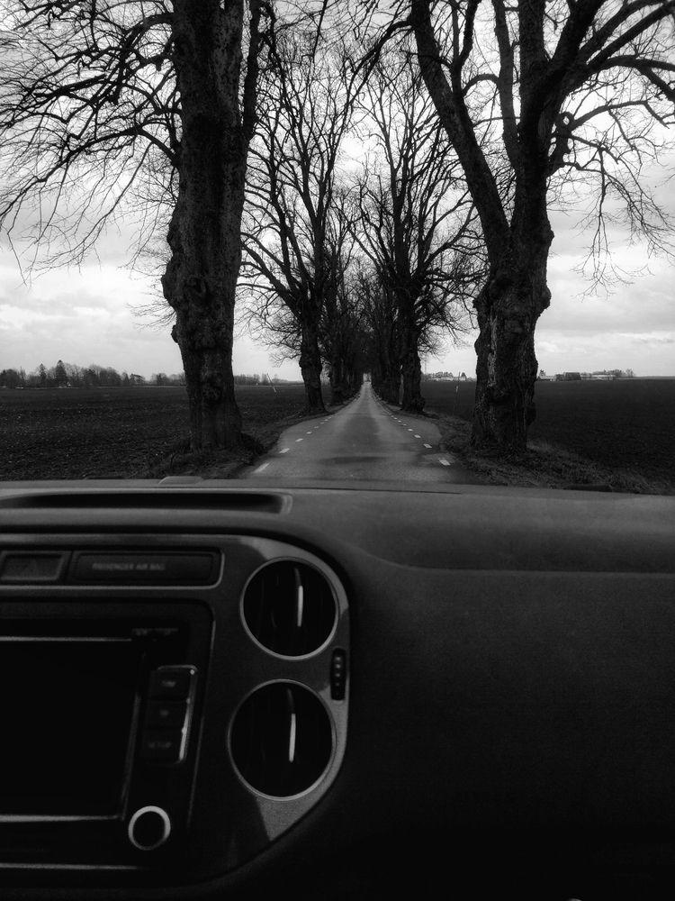 driving, avenue, trees, road - omtanke | ello