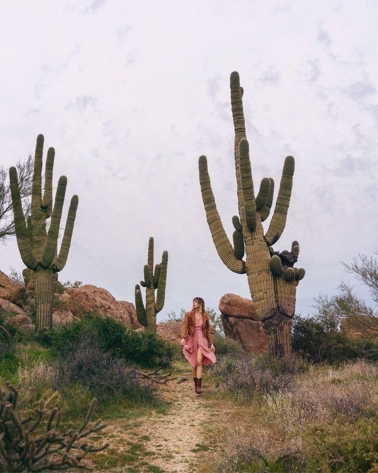 Strolling saguaros Danielle - donjay | ello