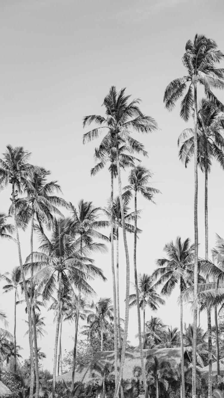 Ngwe Saung, Myanmar | Coconut P - sr27pakbird | ello