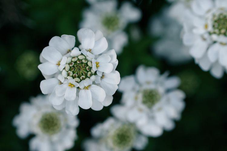 Flowerwave - photography, radial - marcushammerschmitt | ello