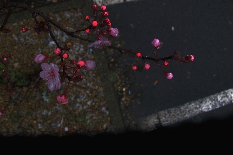fireflies, bloom, poetry - karineduval | ello