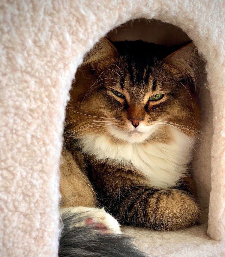 2019 Finn - cat, cats, pets, animals - everythingends | ello